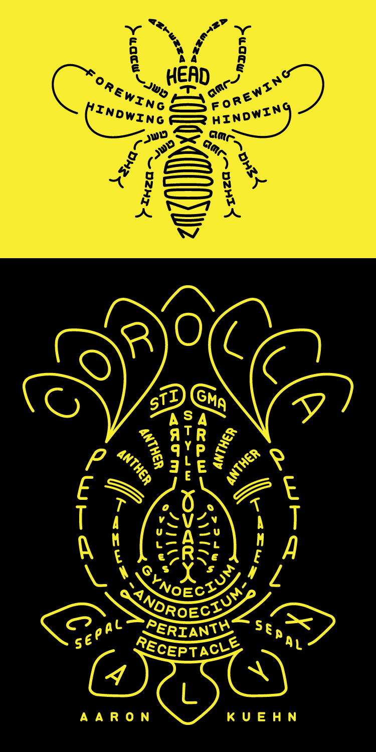A botanical and entomological diagram of a bee pollinating a flower, composed of the names of their parts using typography.